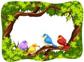 Pássaros selvagens