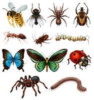 Ensemble de différents insectes sauvages