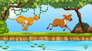 scène de guépard et de cerf