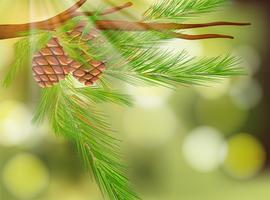 Pine Cone on Natural Green Background