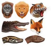 Set van dierenkoppen