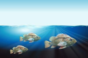 Scena subacquea di tre pesci