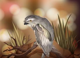 Un pájaro gris en la naturaleza