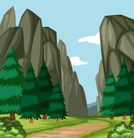 Beautiful wood canyon scene