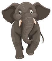 Babyolifant op witte achtergrond