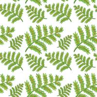 Green fern seamless pattern