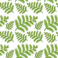 Groen varen naadloos patroon