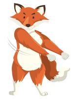 En räv dansar på vit bakgrund
