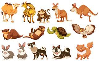 Conjunto de diferentes tipos de animales.