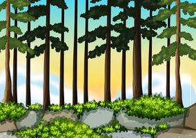 A nature wood background