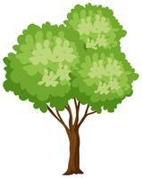 Isoated Baum auf weißem Hintergrund