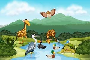 Many animals in nature