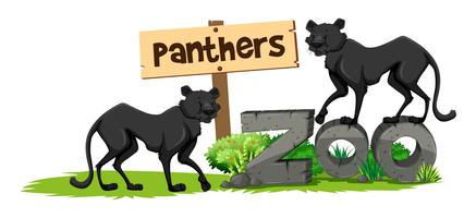 Two panthers in the zoo