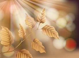 Dry Leaf on Nature Background