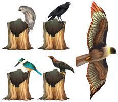Wild birds on log