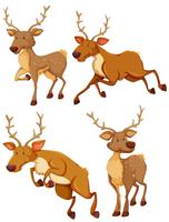 Cute deer in four different posts