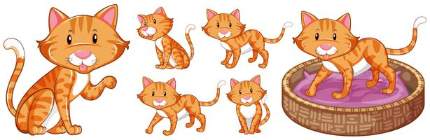 Gullig katt i olika handlingar