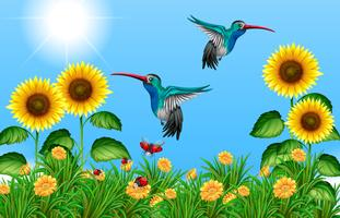 Two hummingbirds flying in sunflower field vector