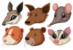Diferentes cabezas de animales sobre fondo blanco