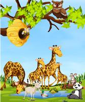 Wildlife animals scene