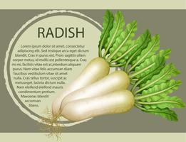 Fresh radish with text design