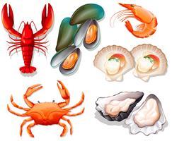 Ensemble de fruits de mer sur fond blanc