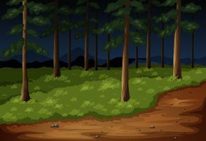 Forest scene with trees and trail at night