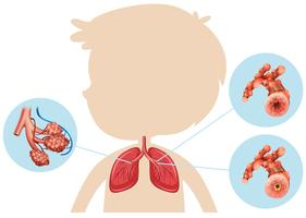 Anatomy of a Boy Lung vector