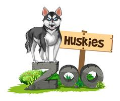 Huskies debout sur le signe du zoo