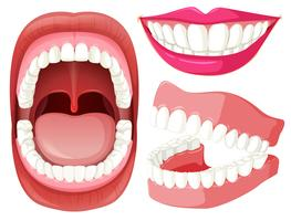 Set of mouth and teeth vector