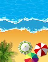 Cena aérea da praia e do oceano