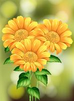 Beautiful Sunflower on Nature Background vector