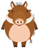 Warthog on white background vector