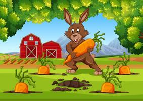 Coelho com cenoura cena de fazenda