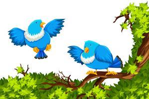 Pájaros azules en la rama