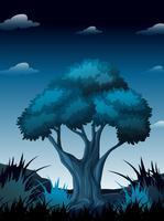 Uma cena noturna na floresta