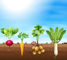Um conjunto de vegetais de raiz