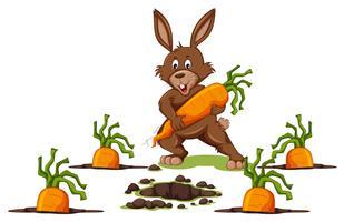 Scène de lapin aux carottes