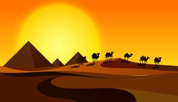 Camelos de silhueta na cena do deserto