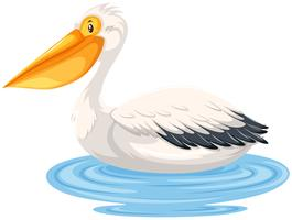 Pelican sitting on water