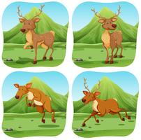 Herten in vier verschillende scènes