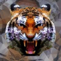 Low poly tiger design, vector illustration