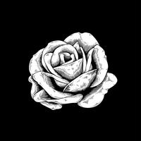 Icona di vettore della natura del fiore del disegno di Rosa su fondo nero