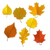 conjunto de folhas de outono isolado no fundo branco