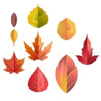 conjunto de hojas de otoño aislado sobre fondo blanco