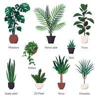 Vektor uppsättning av olika vanliga inomhus prydnadsväxter med namn.