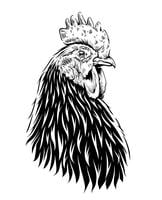 Vektor Rooster Illustration