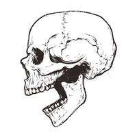 Anatomic Skull Vector