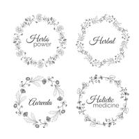 Herbs Illustration. Floral frames.