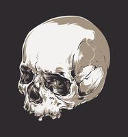 Crâne Vectoriel